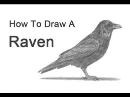 how to draw a raven or crow youtube