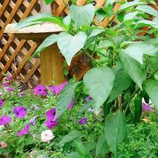 mountain gardening small space vegetable garden