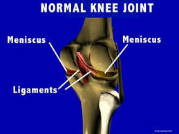 Interactive Knee Anatomy Normal Joint Structure Of The Knees Several Views Slides Images