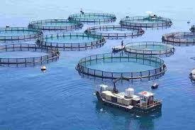 fish farms fish farming information resources farms