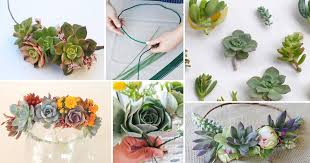 diy succulent diy succulent crown in 10 easy steps balcony garden web