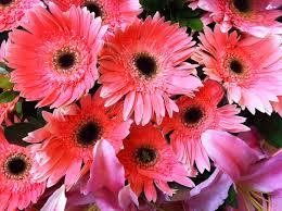 flowers in november file hk central flowers city hall art expo pink n red pattern nov