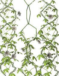 Best Plants For Vertical Garden - 20 best urban gardens