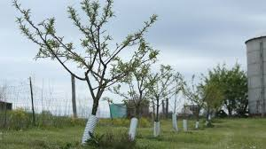 Trees Backyard Tips To Establish A Backyard Fruit Tree Orchard Ohio Farm Bureau