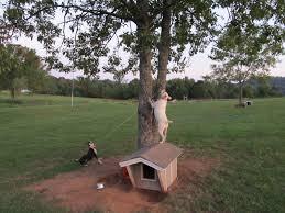 backyard zipline reviews home outdoor decoration