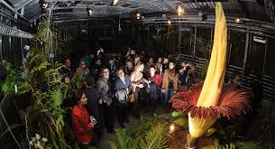largest flower in the world world s largest flower that survives only for 48 hours blooms in