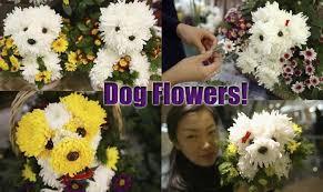 Dog Flower Arrangement Valentine U0027s Day Archives The Dog Guide