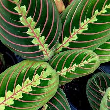 Best Plant For Indoor Low Light 17 Best Houseplants For Low Light Images On Pinterest Plants