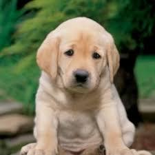 Puppy Eyes Meme - puppy dog eyes meme generator