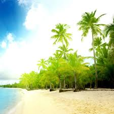 42 coconut wallpapers hd quality coconut images coconut