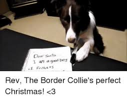 Border Collie Meme - 25 best memes about border collie border collie memes