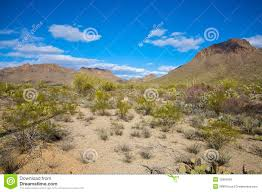 sonoran desert native plants sonoran desert landscape royalty free stock photo image 12861655