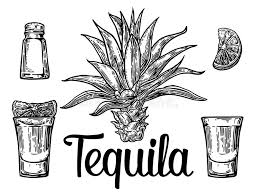 glass and botlle of tequila cactus salt and lime hand drawn