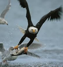 Delaware wildlife tours images Delaware river jet boat rides png