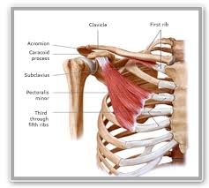Rotator Cuff Injury From Bench Press A Study On Shoulder Injury Prevention You Cannot Miss U2013 Isokinetic