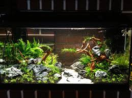 Aquascape Shop Aquascape Timelapse 112l
