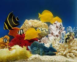 checklist for starting a saltwater aquarium at home