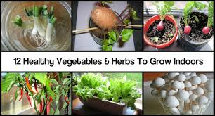 Herbs Indoors by Healthy Vegetables U0026 Herbs To Grow Indoors