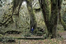 of mosses forks washington atlas obscura