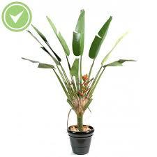 plante verte dans une chambre à coucher plante verte dans une chambre a coucher 14 arbre artificiel bird