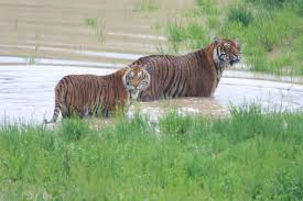 Colorado wild animals images Colorado wild animal sanctuary 39 s lions tigers and bears enjoy the jpg