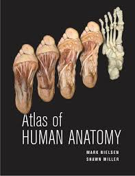 Anatomy Of Human Heart Pdf Atlas Of Human Anatomy Mark Nielsen