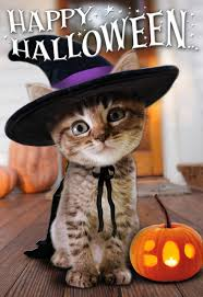 halloween greeting cards cute halloween kitten witch halloween card greeting cards hallmark
