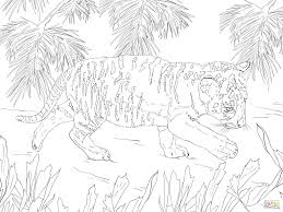 snow tiger coloring page coloring pages for girls white tiger wild animal pencil and in color