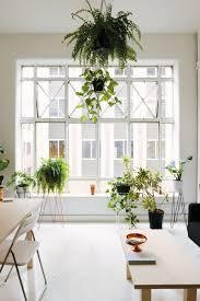 indoor green living with plants u2013 child