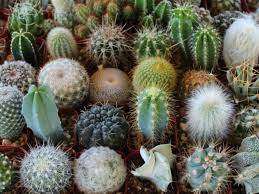cactus facts for kids world succulents