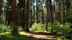 calaveras big trees state park cing