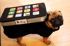 Halloween Costumes Dogs Cutest Puppy Costumes 2011 10 Crazy Pet Costumes