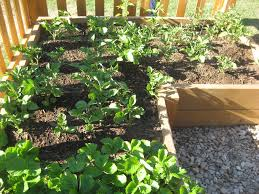 diy raised garden bed plans ideas you can build in a day best