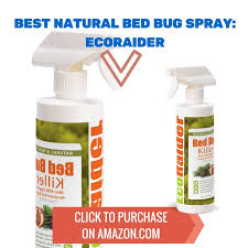 Can Bed Bugs Kill You The Best Natural Bedbug Spray Nontoxic And Effective Kill All