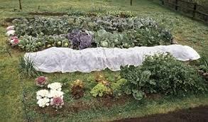a winter vegetable garden in northern california vegetable gardener