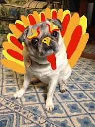 day 325 thankful pug pug