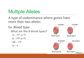 introduction to genetics probability the measure of the likeliness