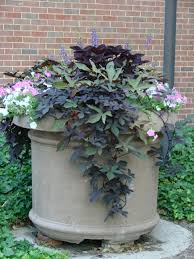 Patio Potato Planters Purple Coleus And Sweet Potato Vine Offset By Pink And White