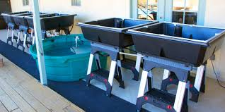 how to do aquaponics aquaponicsusa u0027s blog page 4