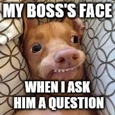 Dumb Face Meme - dumb dog imgflip