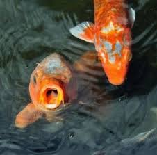 Backyard Pond Supplies by 17 Best Images About Koi Castle On Pinterest Water Features
