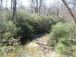 plants native to georgia using georgia native plants wetland woes
