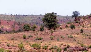 Tropical Savanna Dominant Plants - my blog blog 7 compare and contrast two biomes describe them in
