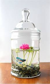 Large Round Glass Vase Fish Tank Clear Round Simple Small Glass Fishnk Archaicawful Photo