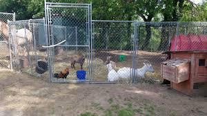 barn buddies u0027have you seen the petting zoo at bruce brown u0027s barn
