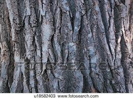 stock photo of grooved wood grain indoor tree bark wood grains