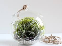 geode air plant terrarium bird and feather 1024x1024 u2013 minigardensblog