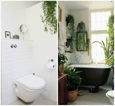 bathroom mesmerizing best bathroom plants 2017 white wall paint
