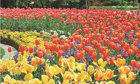 flower magazine archives troy rhone garden design u0026 landscape