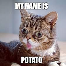 Lil Bub Meme - lil bub memes wiki anime amino